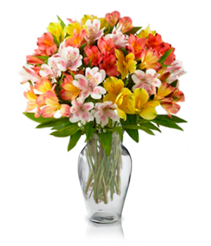 100 Blooms of Alstroemeria