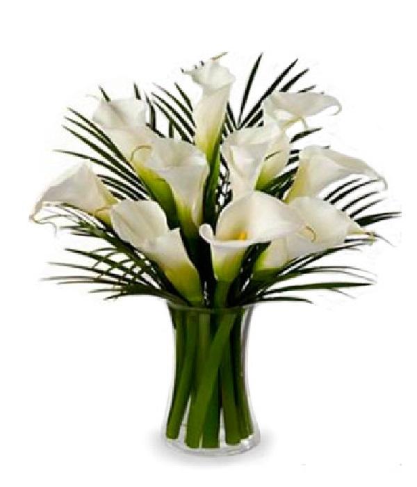 10 Stunning Calla Lilies