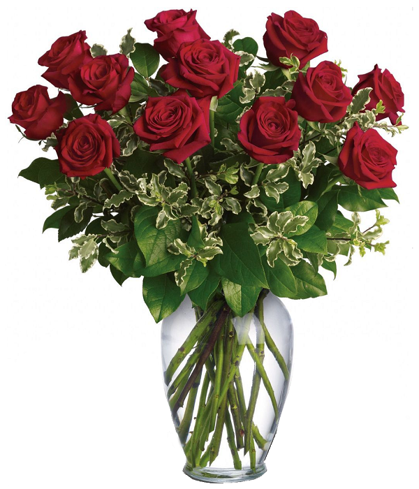12 Extra Long Stemmed Red Roses
