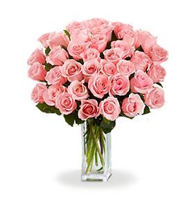 36 Long Stem Pink Roses
