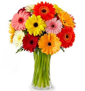 Classic Rainbow Gerbera Bouquet