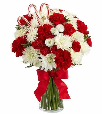24 Candy Cane Carnations