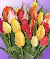 Sensational Spring Tulips