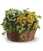 "12"" Planter Basket"