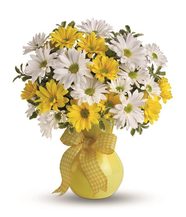 Classic Yellow & White Daisies