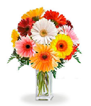 Rainbow Gerbera Bouquet