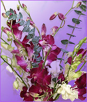 Assorted Colour Dendrobium Orchids