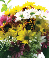 Classic Assorted Colour Daisy Bouquet