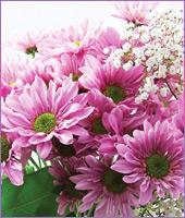 Classic Mauve Daisy Bouquet